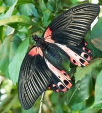 Пеперуди–януари