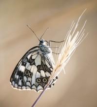 Пеперуди–февруари