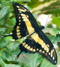 Пеперуди–март