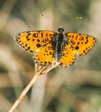 Пеперуди–април
