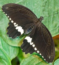 Пеперуди–май