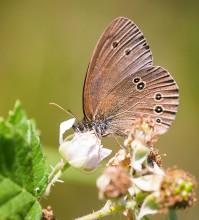 Пеперуди–юни