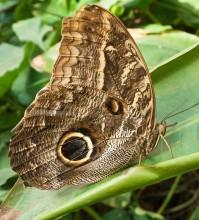 Пеперуди–август
