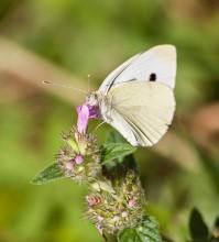 Пеперуди–септември