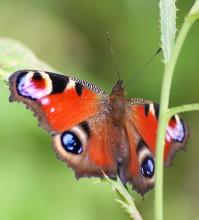 Пеперуди–октомври