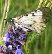 Пеперуди–ноември