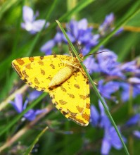Пеперуди–декември